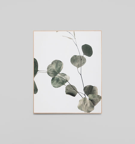 Eucalyptus Leaves Box Framed Canvas