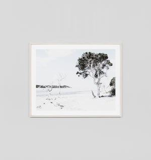 Tree Cove Beach Framed Print