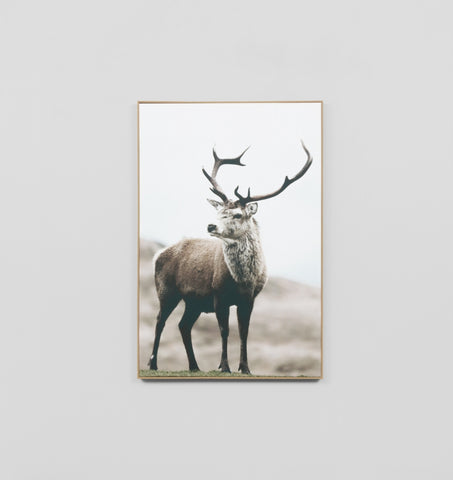 Elk Box Framed Canvas