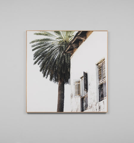 Palm Window Box Framed Canvas
