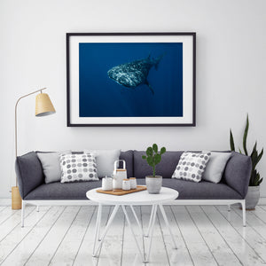 Whale Shark Wall Art in Black Frame