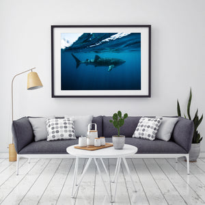 Whale Shark Fine Art Print in black frame on wall