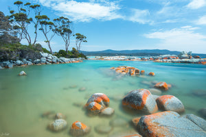 Binalong Bay Gum Tree Summers Day Landscape photography
