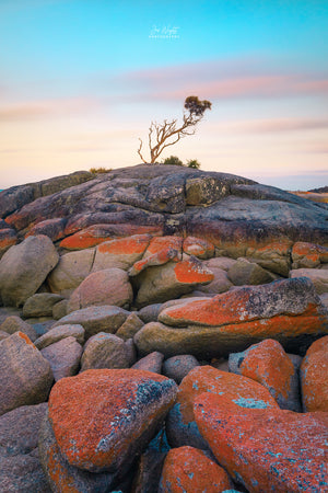 Binalong Bay Tree Fine Art Print