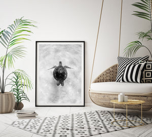 Black and White Turtle Art