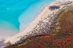Blue Vs Red - Shark Bay. Western Australia