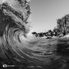 Black & White curl - QLD Australia