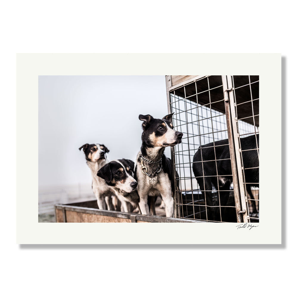 Dogs on Farm, Tadd Myers Photography