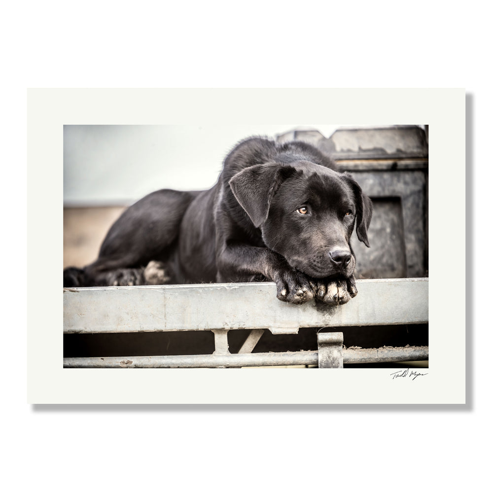 Dog on Farm, Tadd Myers Photography