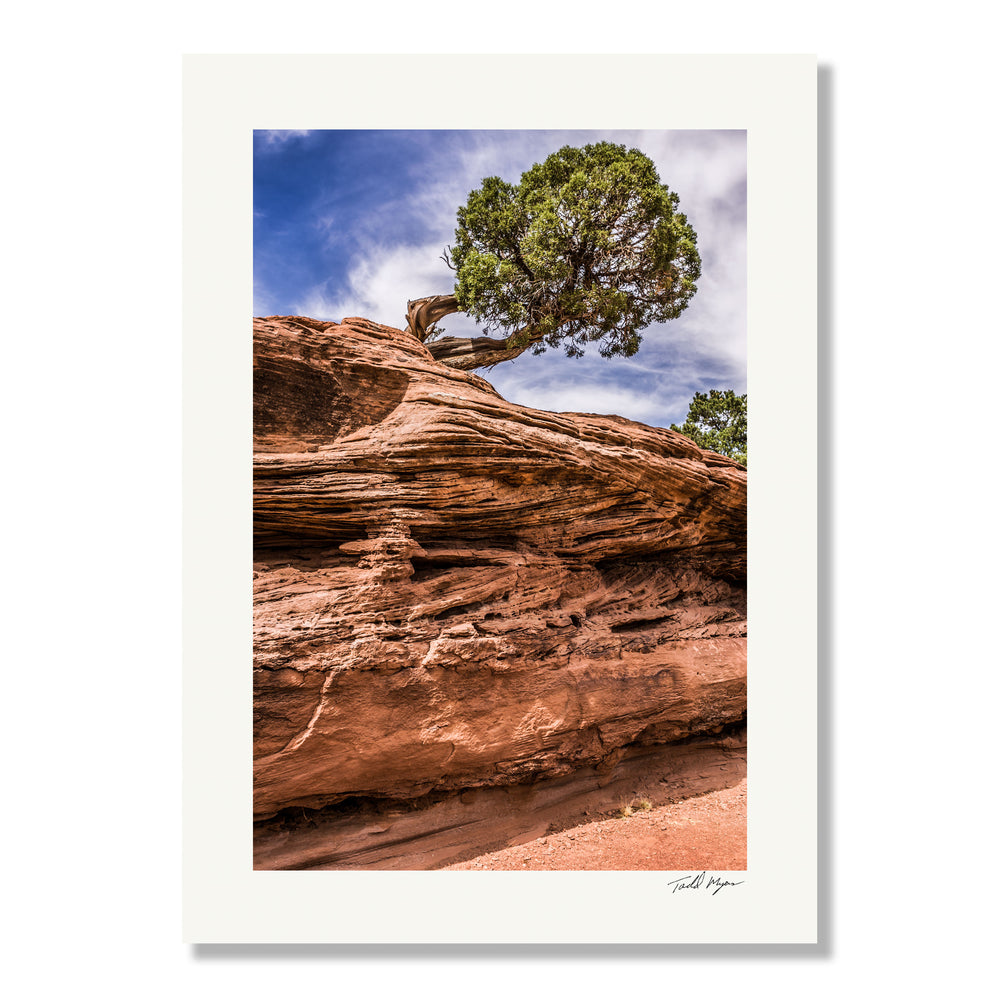 Desert Tree - Colorado Landscape, Tadd Myers Photography