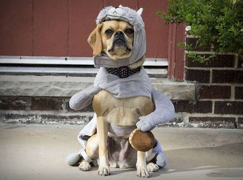 Dog with squirrel halloween customer