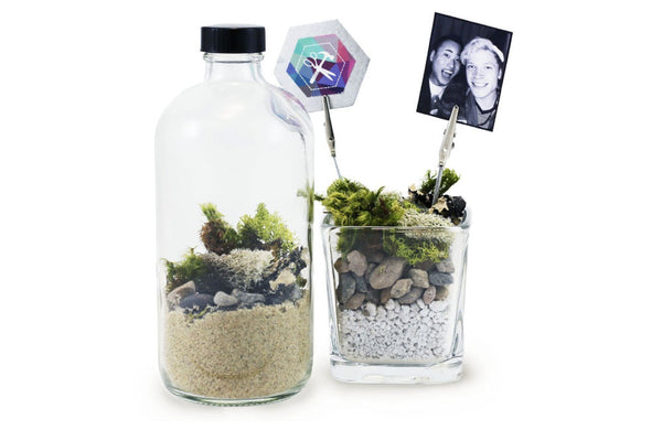 Apothecary Moss Terrarium & Photo Clip Project Kit