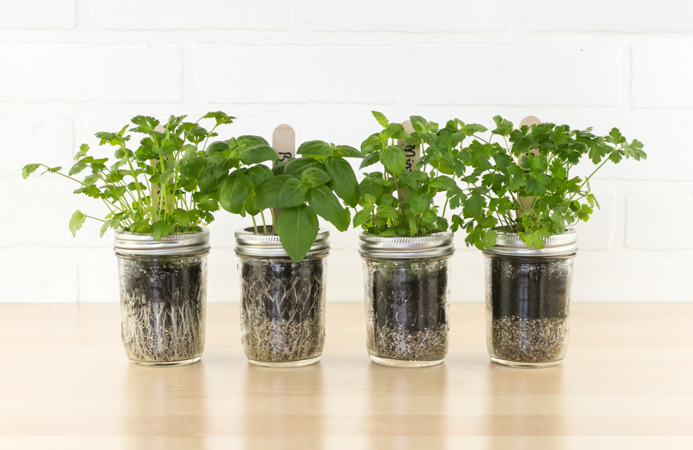 Mason Jar Herb Garden Kit DIY Indoor Herb Garden Project MakersKit