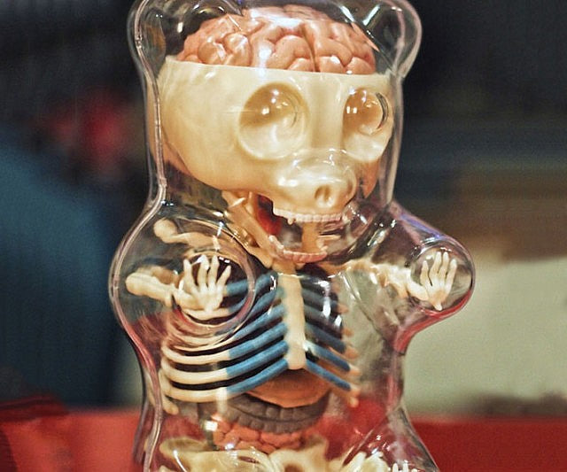Gummi Bear Skeleton Anatomy Model