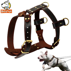 Leather Training Harness 23''-34.5'