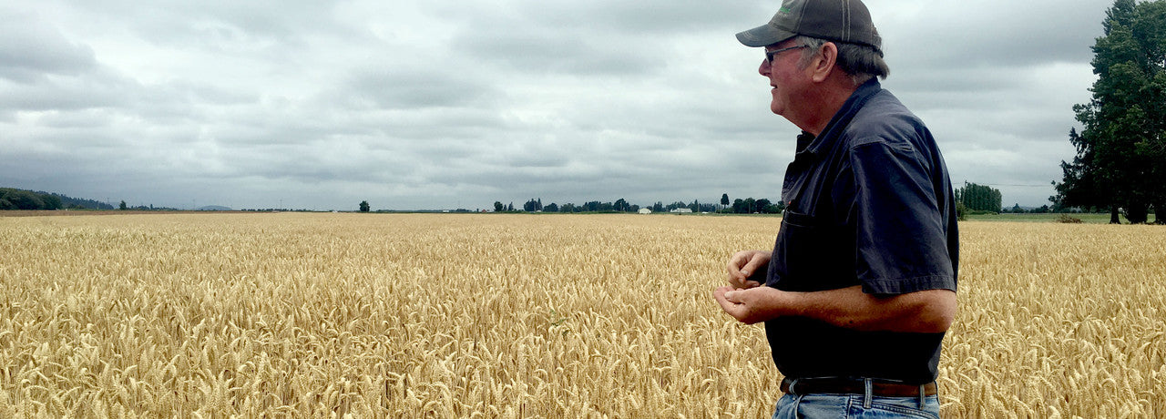 Our wheat farmer, Dave Hedlin of Hedlin Farms