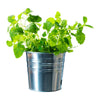 Thrive Planter - Small