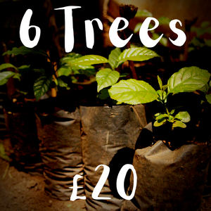 6 Trees | Books for Trees