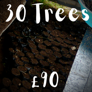 30 Trees | Books for Trees
