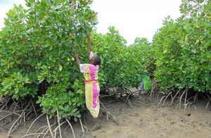 Plant & Protect | Camp Mombassa Mangroves