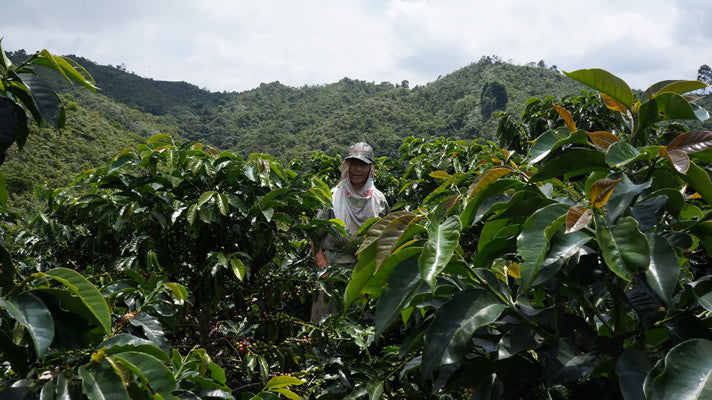 Original Colombian Coffee has a new online store