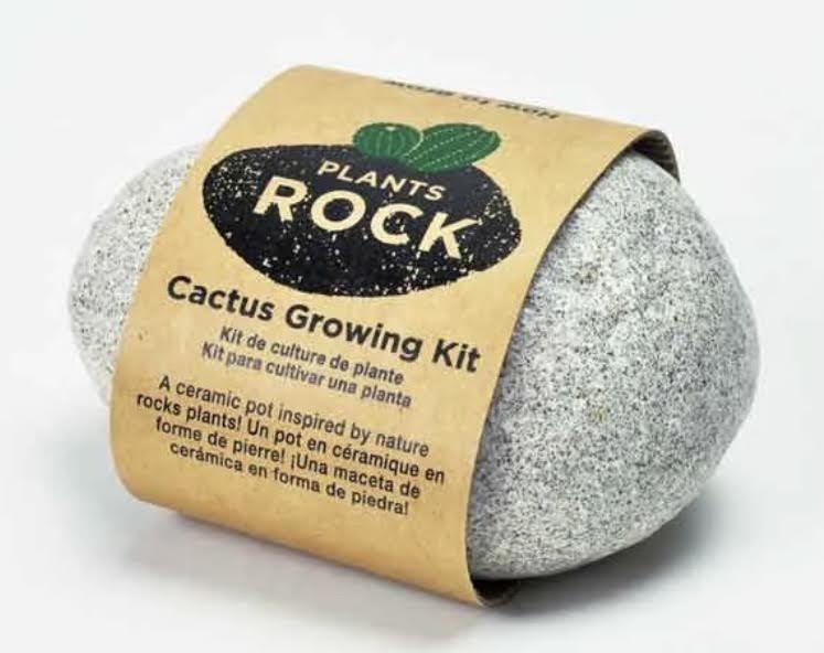 Cactus Growing Rock