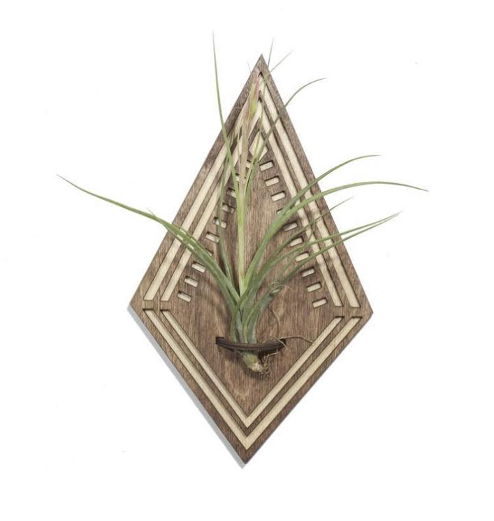 Diamond Airplant Wall Hanger with plant