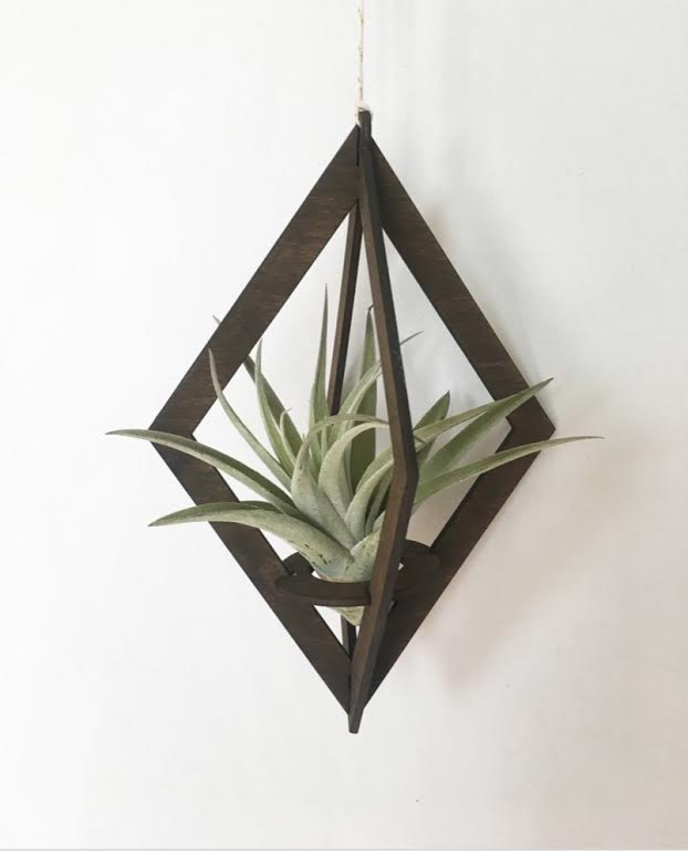 Diamond Walnut Airplant Hanger with plant