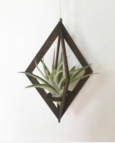 Diamond Walnut Air Plant Hanger
