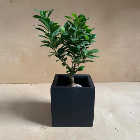 Block Black Planter- Small