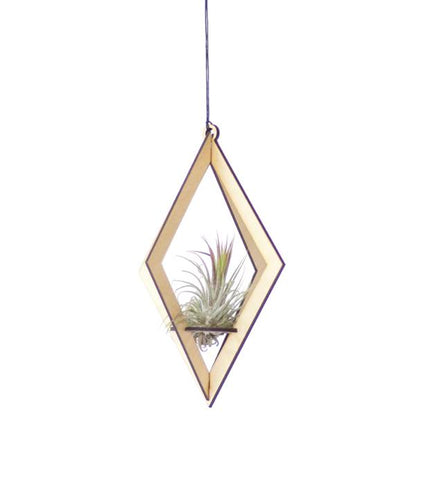 Air Plant Hanger Diamond- Maple