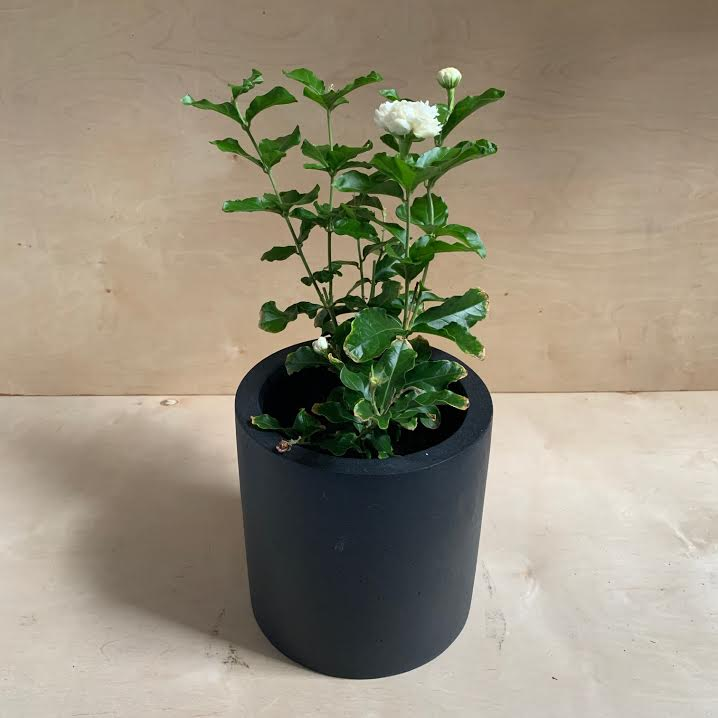 Puk Black Planter- Medium