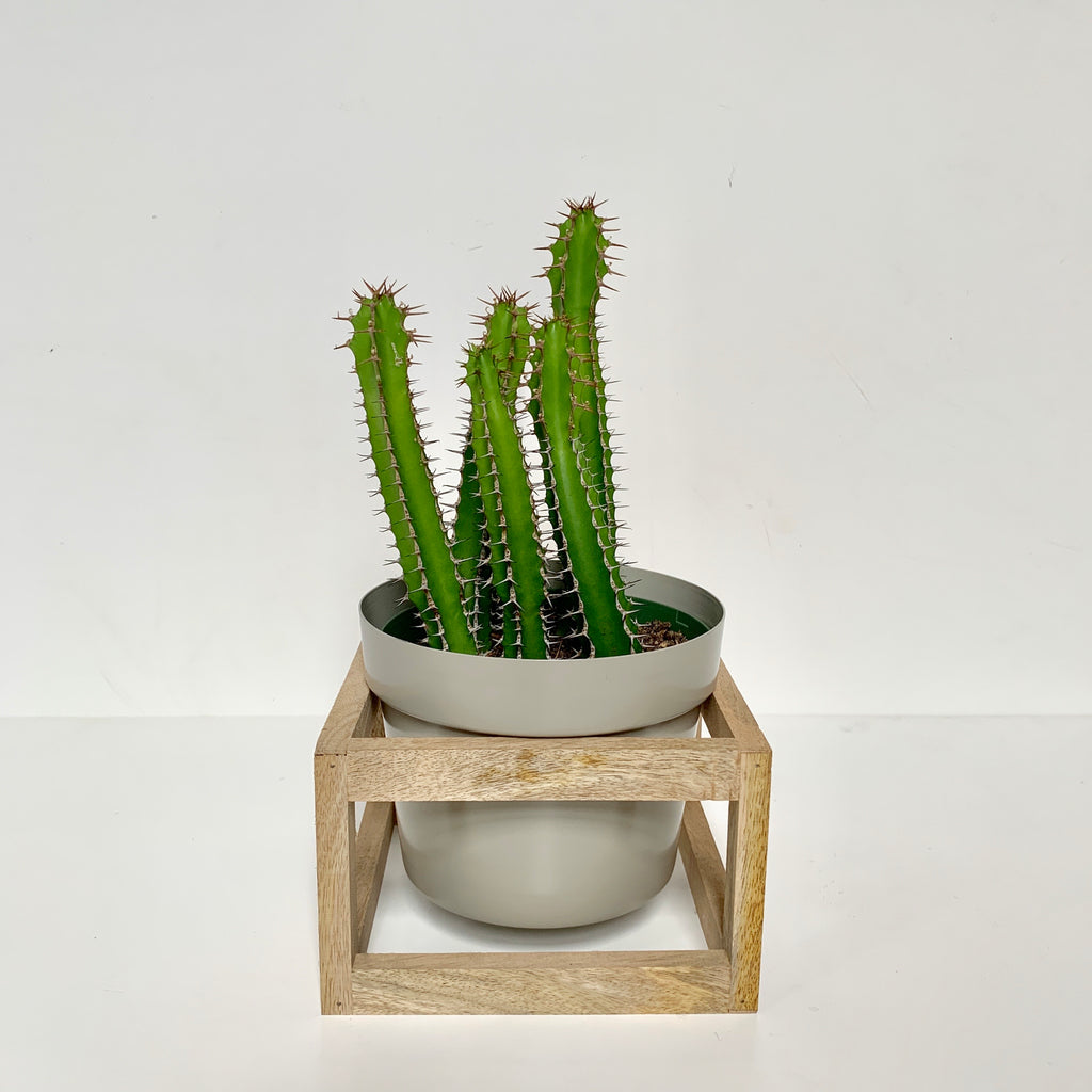Wood Stand with Grey Planter