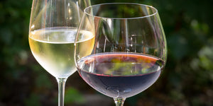Red Wines vs. White Wines