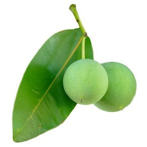 Tamanu Oil Acne Treatment