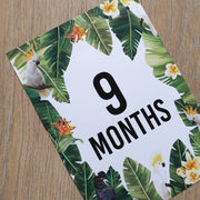 'Averie' Cockatoo Baby Milestone Cards 0-12 months