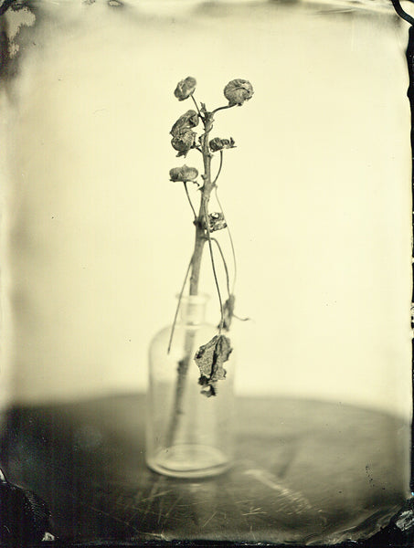 Week of Wet-Plate, Ambrotype, Wet-plate, collodion, Kollodium, intense