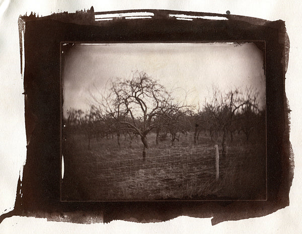Wetplate, Kollodium, Saltprint, Albumin, Collodion, Ambrotype, Ambrotypie