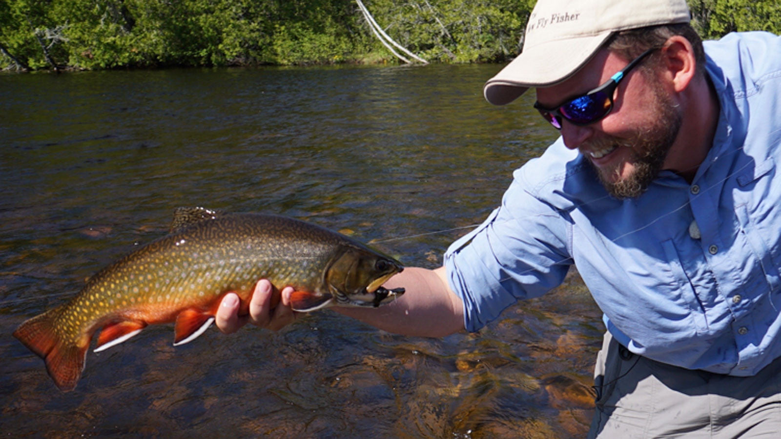 Dry Fly Brook Trout