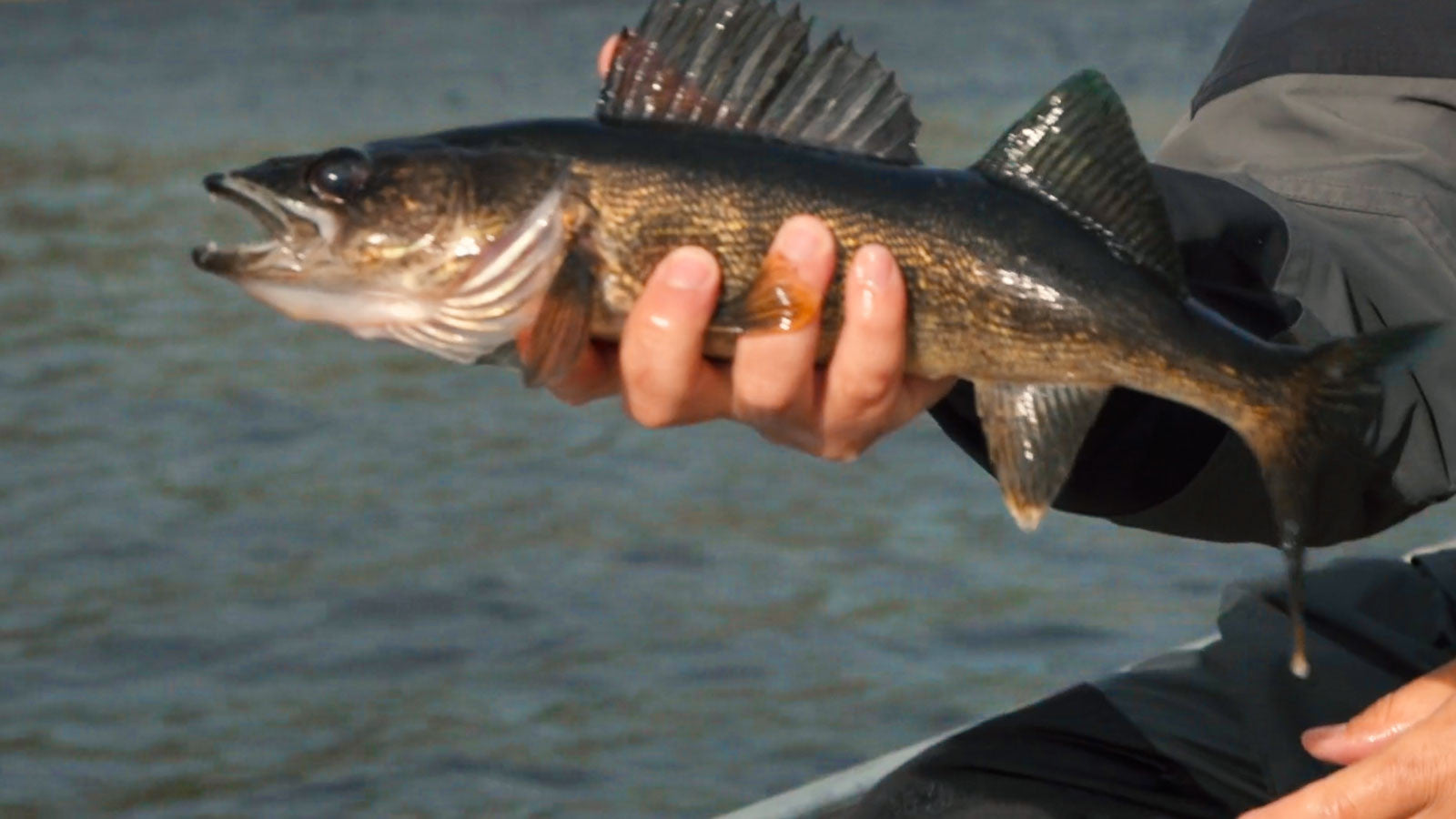 Walleye the Gear you Need