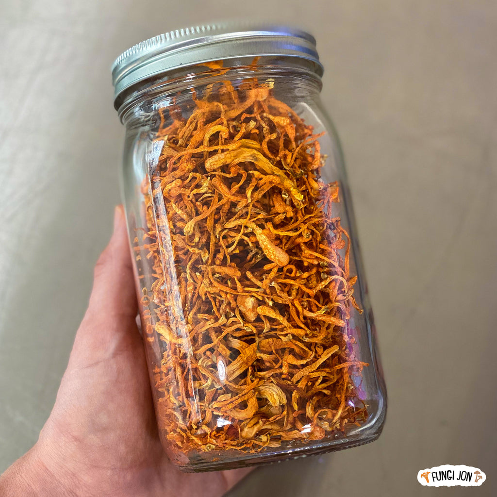 Dried Cordyceps