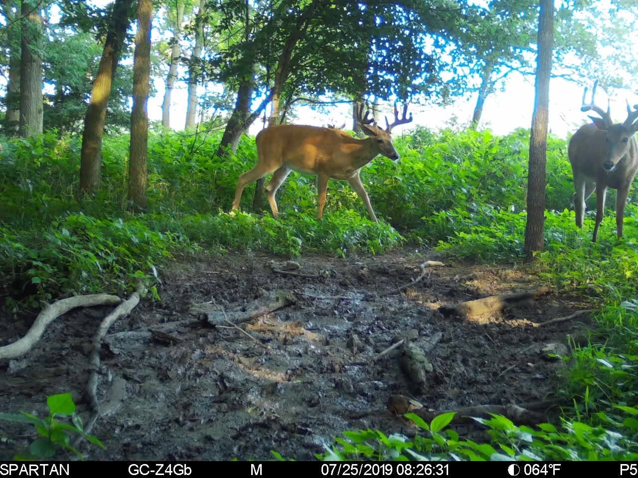 Cell Cam Strategy: Change The Way You Hunt