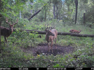 Mineral For Whitetails: To Feed Or Not To Feed