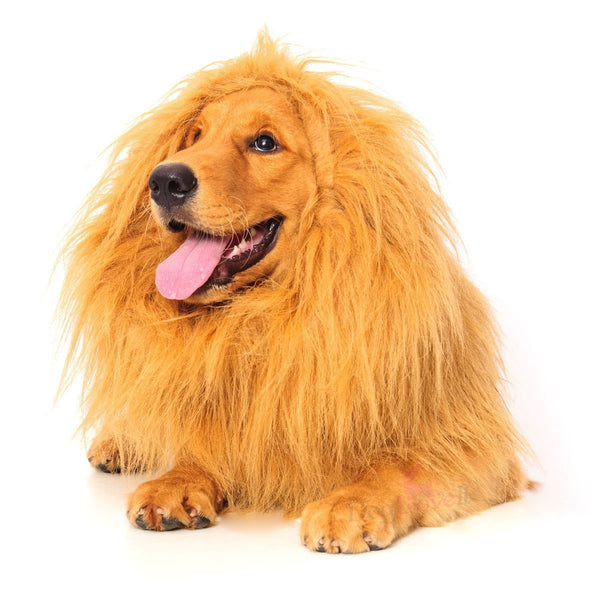 Cecil The Lion Dog Costume