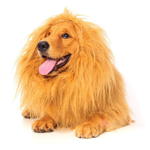 Cecil The Lion Dog Costume - OddGifts.com