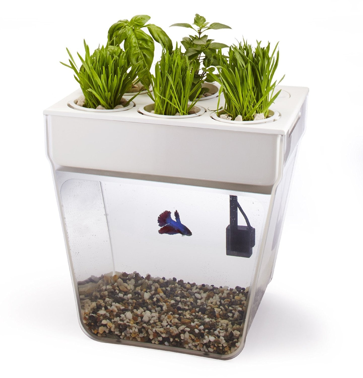 Fish Tank And Planter - OddGifts.com