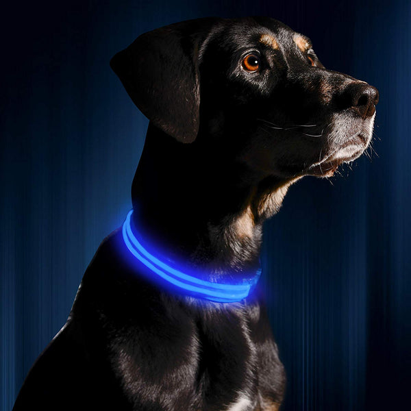 LED Flashing Dog Collar - oddgifts.com