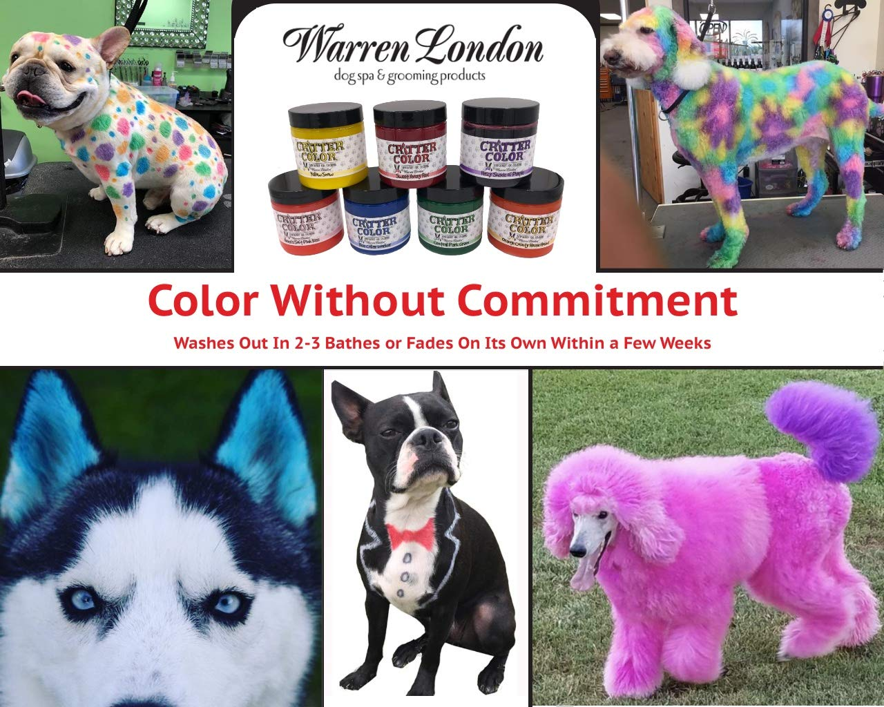 Paint your pet - oddgifts.com
