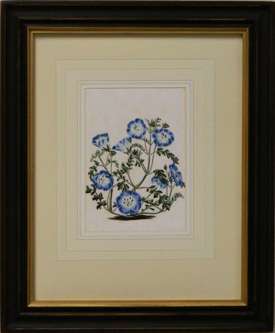 Vintage English Botanical Study Blue III