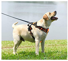 Dog Harness No Pull Pet Harness Adjustable Reflective Oxford 2 Leash Attachments